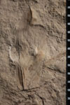 http://mczbase.mcz.harvard.edu/specimen_images/entomology/paleo/large/PALE-4449_Artinska_clara_FW-dry-PartA.jpg