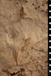 http://mczbase.mcz.harvard.edu/specimen_images/entomology/paleo/large/PALE-4449_Artinska_clara_FW-etho-PartA.jpg