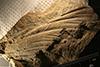 http://mczbase.mcz.harvard.edu/specimen_images/entomology/paleo/large/PALE-4516_Meganisoptera.jpg