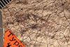 http://mczbase.mcz.harvard.edu/specimen_images/entomology/paleo/large/PALE-470_Zetobora_brunneri_type_1.jpg