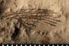 http://mczbase.mcz.harvard.edu/specimen_images/entomology/paleo/large/PALE-4836_Liomopterum_ornatum_etho.jpg