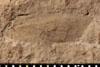 http://mczbase.mcz.harvard.edu/specimen_images/entomology/paleo/large/PALE-4840_Liomopterum_ornatum_etho.jpg