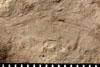http://mczbase.mcz.harvard.edu/specimen_images/entomology/paleo/large/PALE-4850_Liomopterum_ornatum_etho.jpg