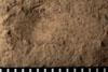 http://mczbase.mcz.harvard.edu/specimen_images/entomology/paleo/large/PALE-4854_Liomopterum_ornatum_etho.jpg