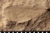 http://mczbase.mcz.harvard.edu/specimen_images/entomology/paleo/large/PALE-4871_Liomopterum_ornatum_etho.jpg