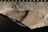 http://mczbase.mcz.harvard.edu/specimen_images/entomology/paleo/large/PALE-4884_Liomopterum_ornatum_dry-PartA.jpg