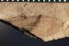 http://mczbase.mcz.harvard.edu/specimen_images/entomology/paleo/large/PALE-4884_Liomopterum_ornatum_etho-PartA.jpg