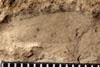 http://mczbase.mcz.harvard.edu/specimen_images/entomology/paleo/large/PALE-4893_Chelopterum_peregrinum_etho.jpg