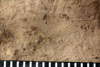 http://mczbase.mcz.harvard.edu/specimen_images/entomology/paleo/large/PALE-4925_Phenopterum_elongatum_etho-PartA.jpg