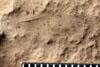 http://mczbase.mcz.harvard.edu/specimen_images/entomology/paleo/large/PALE-4971_Phenopterum_elongatum_etho-PartB.jpg