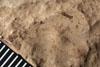 http://mczbase.mcz.harvard.edu/specimen_images/entomology/paleo/large/PALE-4972_Phenopterum_elongatum_etho.jpg