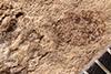 http://mczbase.mcz.harvard.edu/specimen_images/entomology/paleo/large/PALE-5005_Coeliodes_primotinus_type_1.jpg
