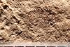 http://mczbase.mcz.harvard.edu/specimen_images/entomology/paleo/large/PALE-5005_Coeliodes_primotinus_type_2.jpg