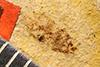 http://mczbase.mcz.harvard.edu/specimen_images/entomology/paleo/large/PALE-5046_Nysius_stratus_type.jpg
