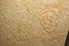 http://mczbase.mcz.harvard.edu/specimen_images/entomology/paleo/large/PALE-5997_Achelata_det_larva.jpg