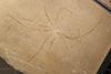 http://mczbase.mcz.harvard.edu/specimen_images/entomology/paleo/large/PALE-6019_Achelata_det_larva.jpg