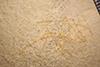 http://mczbase.mcz.harvard.edu/specimen_images/entomology/paleo/large/PALE-6021_Achelata_det_larva.jpg