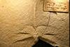 http://mczbase.mcz.harvard.edu/specimen_images/entomology/paleo/large/PALE-6178_Anax_buchii.jpg