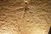 http://mczbase.mcz.harvard.edu/specimen_images/entomology/paleo/large/PALE-6184_Protolindenia_wittei.jpg