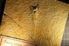 http://mczbase.mcz.harvard.edu/specimen_images/entomology/paleo/large/PALE-6185_Gomphus_sp_2.jpg
