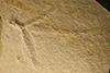 http://mczbase.mcz.harvard.edu/specimen_images/entomology/paleo/large/PALE-6222_Heterophlebia_eximia_holotype.jpg