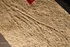 http://mczbase.mcz.harvard.edu/specimen_images/entomology/paleo/large/PALE-6235_Cymatophlebia_pumilio_holotype_(cp_6234)_1.jpg