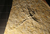 http://mczbase.mcz.harvard.edu/specimen_images/entomology/paleo/large/PALE-6245_Libellula_sp.jpg
