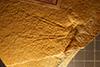 http://mczbase.mcz.harvard.edu/specimen_images/entomology/paleo/large/PALE-6251_Cymatophlebia_longialata.jpg