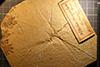 http://mczbase.mcz.harvard.edu/specimen_images/entomology/paleo/large/PALE-6253_Cymatophlebia_longialata_(cp_6252).jpg