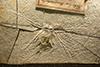 http://mczbase.mcz.harvard.edu/specimen_images/entomology/paleo/large/PALE-6257_Cymatophlebia_longialata_(cp_6256).jpg