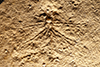 http://mczbase.mcz.harvard.edu/specimen_images/entomology/paleo/large/PALE-6264_Nannogomphus_bavaricus_(cp_6265).jpg