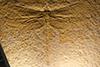 http://mczbase.mcz.harvard.edu/specimen_images/entomology/paleo/large/PALE-6275_Cymatophlebia_jurassica_paratype_(cp_6193).jpg