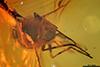 http://mczbase.mcz.harvard.edu/specimen_images/entomology/paleo/large/PALE-6359_syn2_Dolichopodidae_qm.jpg