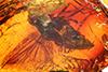 http://mczbase.mcz.harvard.edu/specimen_images/entomology/paleo/large/PALE-6491_Rhagionidae.jpg
