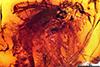 http://mczbase.mcz.harvard.edu/specimen_images/entomology/paleo/large/PALE-6521_Dolichopodidae.jpg