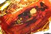 http://mczbase.mcz.harvard.edu/specimen_images/entomology/paleo/large/PALE-6526_Dolichopodidae.jpg