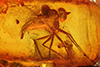 http://mczbase.mcz.harvard.edu/specimen_images/entomology/paleo/large/PALE-6527_Dolichopodidae.jpg