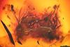 http://mczbase.mcz.harvard.edu/specimen_images/entomology/paleo/large/PALE-6528_Dolichopodidae.jpg