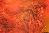 http://mczbase.mcz.harvard.edu/specimen_images/entomology/paleo/large/PALE-6528_syn1_Dolichopodidae.jpg