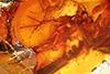 http://mczbase.mcz.harvard.edu/specimen_images/entomology/paleo/large/PALE-6529_Dolichopodidae_2.jpg