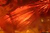 http://mczbase.mcz.harvard.edu/specimen_images/entomology/paleo/large/PALE-6529_Dolichopodidae_3.jpg