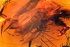 http://mczbase.mcz.harvard.edu/specimen_images/entomology/paleo/large/PALE-6540_Dolichopodidae.jpg