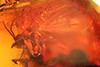 http://mczbase.mcz.harvard.edu/specimen_images/entomology/paleo/large/PALE-6591_syn2_Mycetophilidae.jpg