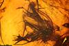 http://mczbase.mcz.harvard.edu/specimen_images/entomology/paleo/large/PALE-6617_Chironomidae.jpg