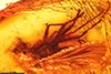 http://mczbase.mcz.harvard.edu/specimen_images/entomology/paleo/large/PALE-6673_Rhagionidae.jpg