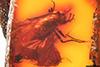 http://mczbase.mcz.harvard.edu/specimen_images/entomology/paleo/large/PALE-6674_Rhagionidae.jpg