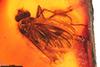http://mczbase.mcz.harvard.edu/specimen_images/entomology/paleo/large/PALE-6679_Rhagionidae.jpg