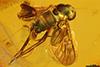 http://mczbase.mcz.harvard.edu/specimen_images/entomology/paleo/large/PALE-6684_Rhagionidae.jpg