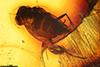 http://mczbase.mcz.harvard.edu/specimen_images/entomology/paleo/large/PALE-6686_Rhagionidae_qm.jpg