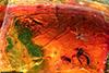http://mczbase.mcz.harvard.edu/specimen_images/entomology/paleo/large/PALE-6766_Mycetophilidae.jpg